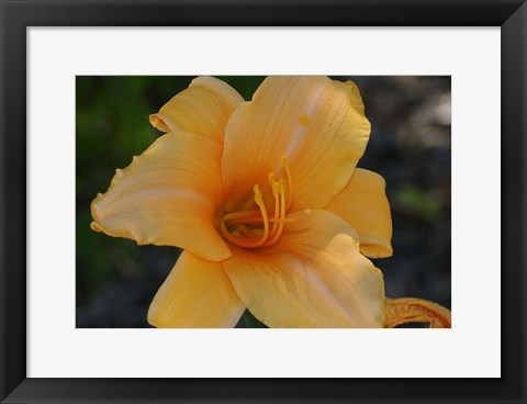 Framed Shades Of Nature Orange Flower Print