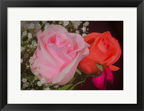 Framed Roses Pink And Red Print