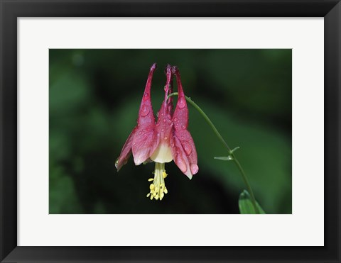 Framed Pink Flower And Stem On Green Print