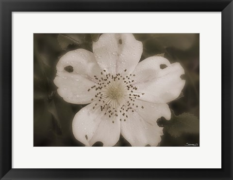 Framed Open White Flower Bloom Print