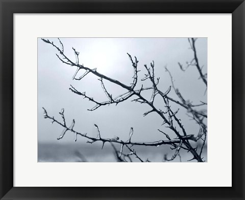 Framed Ice Branch 2 Print