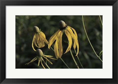 Framed Shades Of Nature Black And Yellow Flower Petals Print