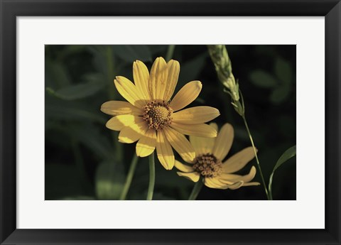 Framed Shades Of Nature Yellow Flowers On Green Print