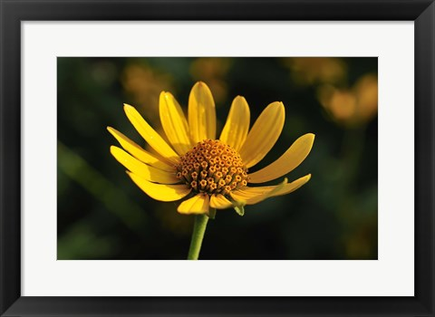 Framed Shades Of Nature Yellow Flower On Green Print