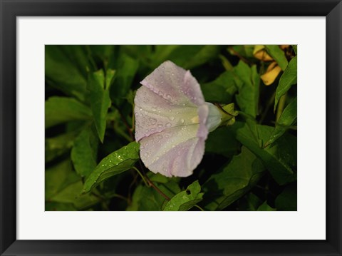Framed Shades Of Nature Lavendar And White Flower II Print