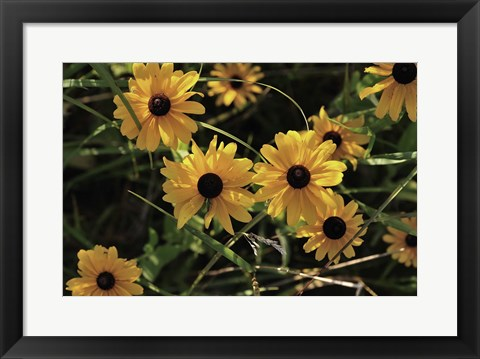 Framed Shades Of Nature Black And Yellow Flowers Print