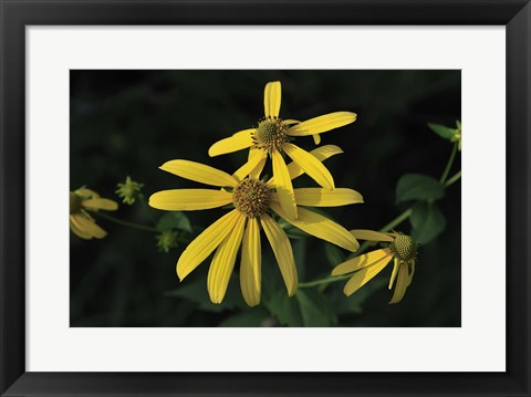 Framed Shades Of Nature Yellow Flowers Print