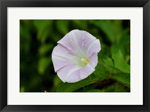 Framed Shades Of Nature Lavendar And White Flower I Print