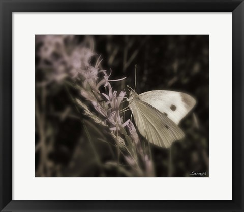 Framed Moth On Lavendar Wildflower Print