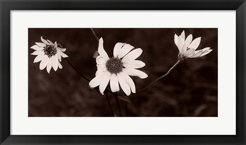 Framed Buffalo River Flowers II Print