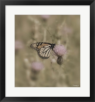 Framed Black And White Butterfly On Flower Closeup Print