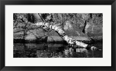 Framed Ash River 11 Print