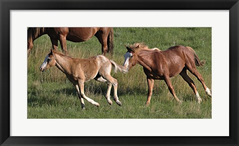 Framed Wildhorses 20 Print
