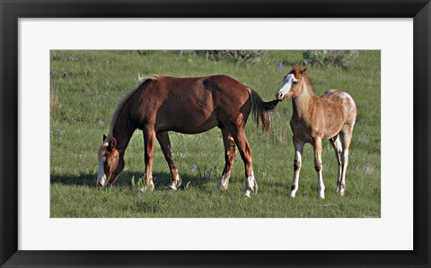 Framed Wildhorses 19 Print