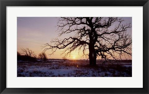 Framed Sunset And Tree Silhouettes In Snow I Print