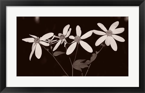 Framed Buffalo River Flowers I Print