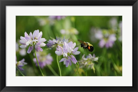 Framed Shades Of Nature Bee And Flowers II Print