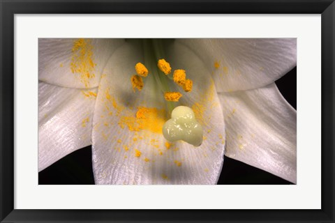 Framed White Flower And Yellow Pollen Print