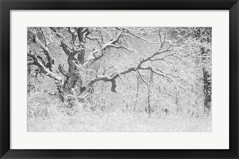 Framed Buffalo Tree In Snow Print