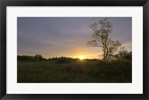 Framed Green Field And Tree At Sunset Print
