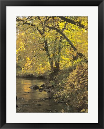 Framed Buffalo River 53 Print