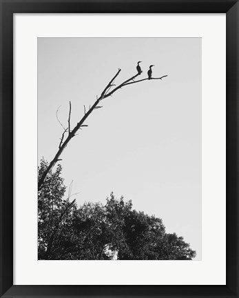 Framed Bird Silhouettes On Branch Print