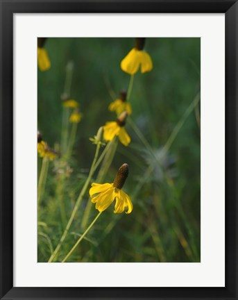 Framed Shades Of Nature Yellow Flowers Green Center I Print