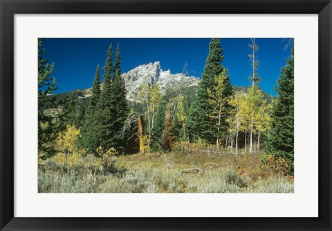 Framed Grand Teton 11 Print