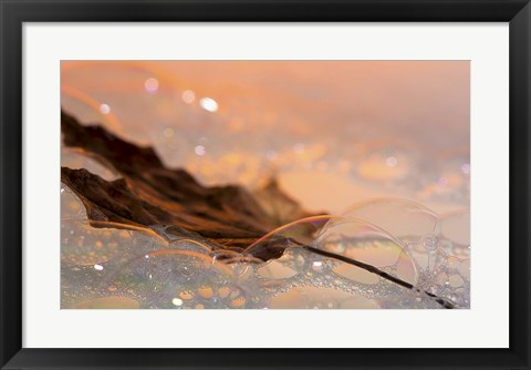 Framed Fall Leaf Floating In Water Bubbles I Print