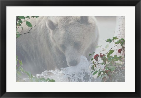 Framed Down Stream Bear Print