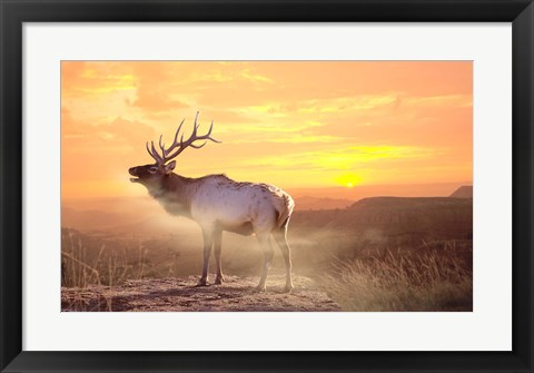 Framed Elk Sunrise In The Badlands Print