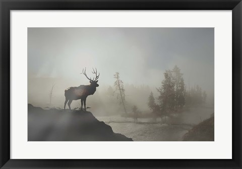 Framed Yellowstone Elk Print