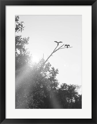 Framed Flying Bird Silhouettes On Branches Print