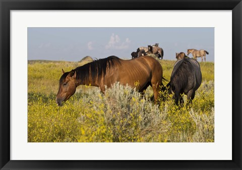 Framed Horses Grazing In Yellow Field III Print