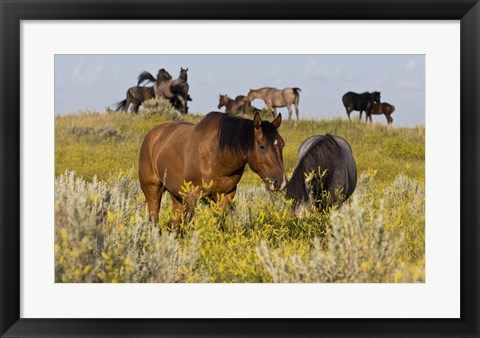 Framed Horses Grazing In Yellow Field I Print