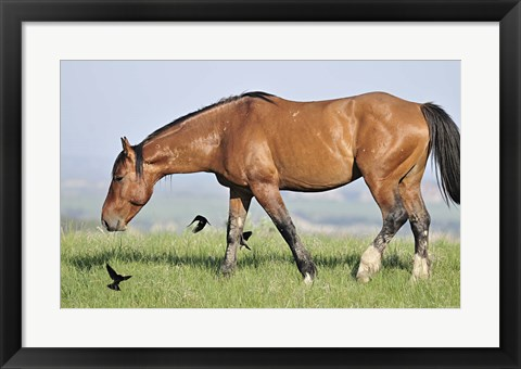 Framed Wildhorses 24 Print