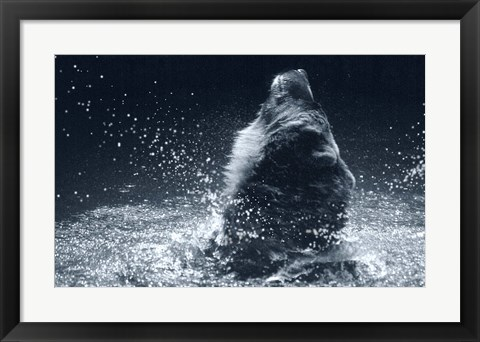 Framed Grizzly Splash Print