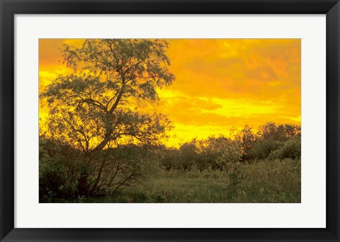 Framed Sunrise Over Green Field Print