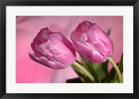 Framed Pink Tulip Duo Print