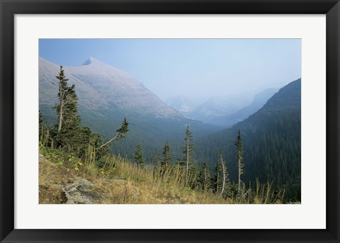 Framed Blue Mountains And Plush Evergreens Print