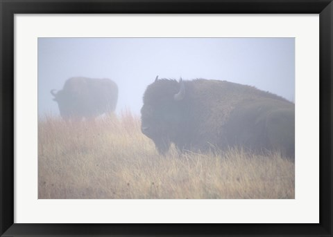 Framed Theodore Roosevelt National Park Buffalo Print