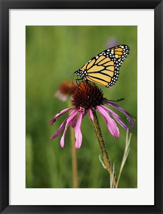 Framed Shades Of Nature Butterfly And Flower II Print