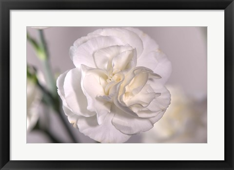 Framed White Flower And Stems Print