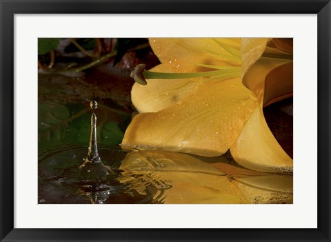 Framed Yellow Flower And Rippled Water Drop Print