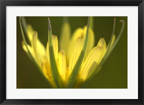 Framed Yellow Flower Petals On Green Print