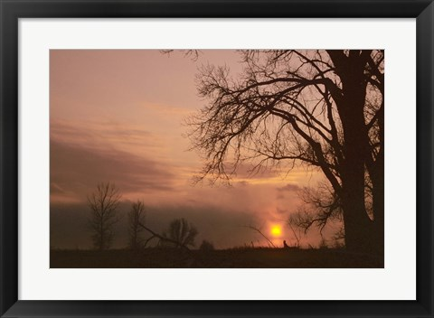 Framed Sunset And Tree Silhouettes In Snow III Print