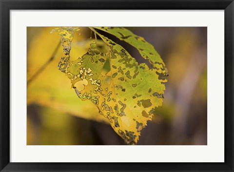 Framed Green And Yellow Leaf Print