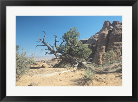 Framed Twisted Tree Under Blue Sky 20 Print