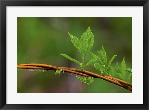 Framed Leaf On Branches Closeup Print