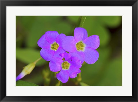 Framed Purple Wildflower Trio Print